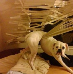 doggy-blinds